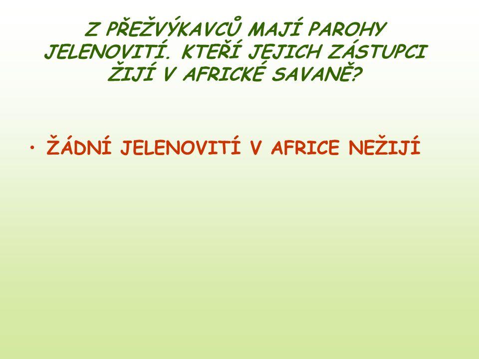 Z PŘEŽVÝKAVCŮ MAJÍ PAROHY JELENOVITÍ. KTEŘÍ JEJICH ZÁSTUPCI ŽIJÍ V AFRICKÉ SAVANĚ? ŽÁDNÍ JELENOVITÍ V AFRICE NEŽIJÍ