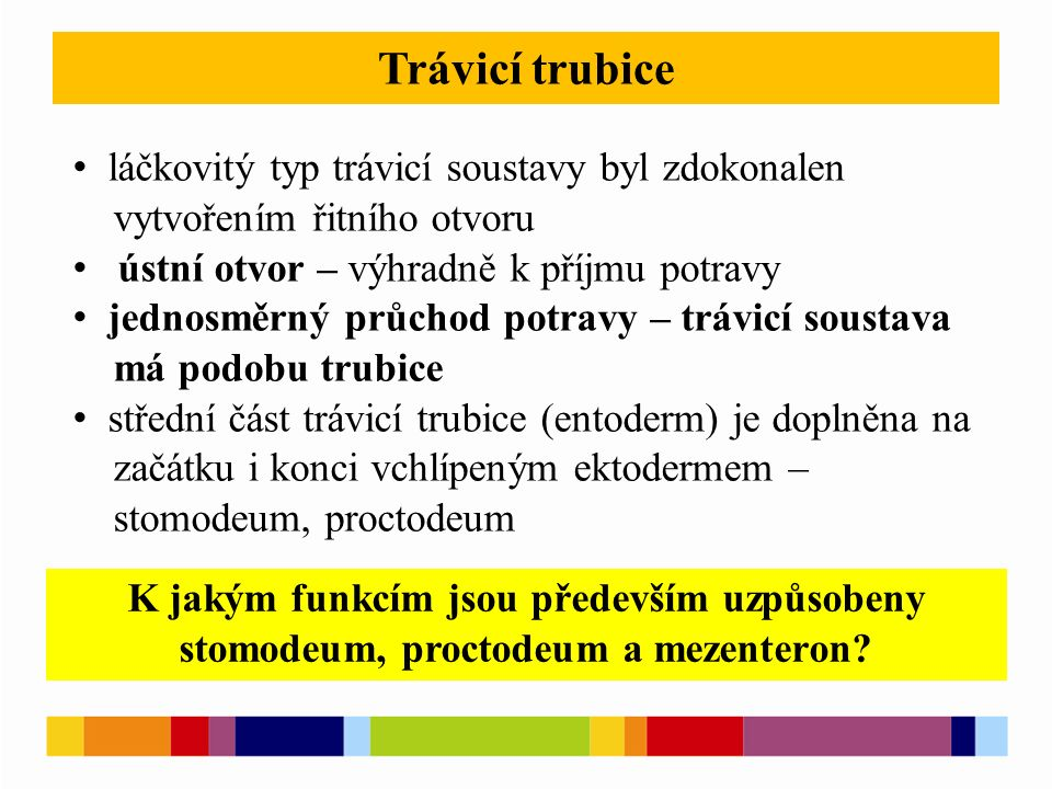 Trávicí trubice láčkovitý typ trávicí soustavy byl zdokonalen vytvořením řitního otvoru ústní otvor – výhradně k příjmu potravy jednosměrný průchod potravy – trávicí soustava má podobu trubice střední část trávicí trubice (entoderm) je doplněna na začátku i konci vchlípeným ektodermem – stomodeum, proctodeum K jakým funkcím jsou především uzpůsobeny stomodeum, proctodeum a mezenteron?