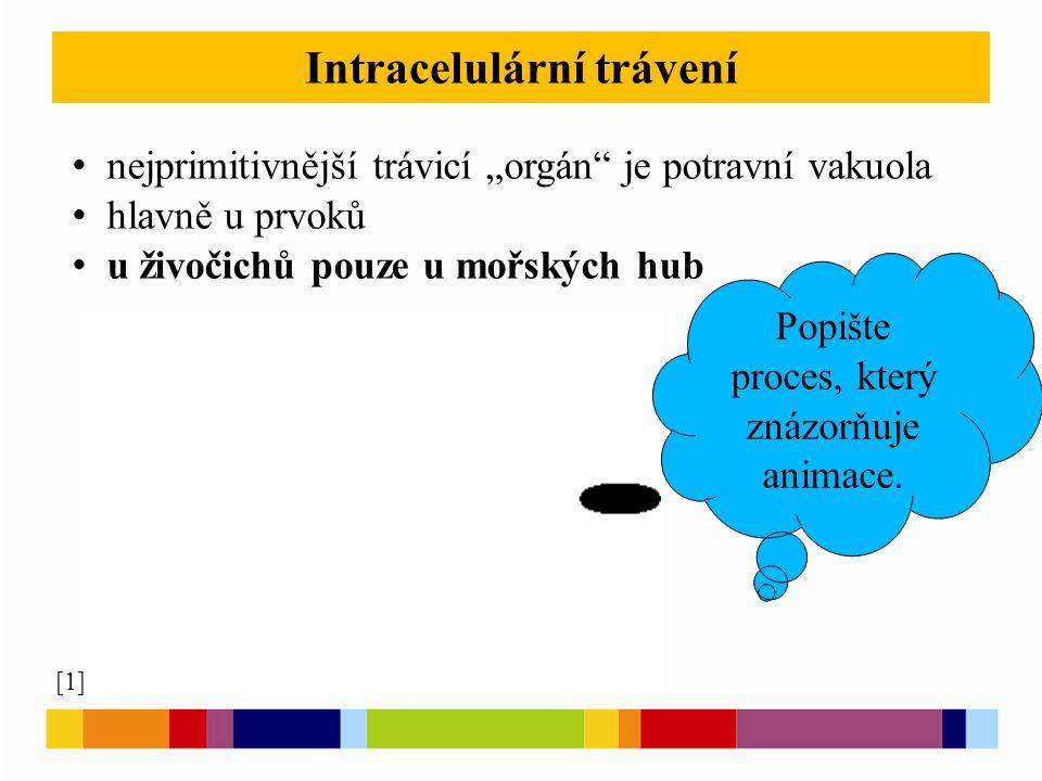 """Intracelulární trávení nejprimitivnější trávicí """"orgán je potravní vakuola hlavně u prvoků u živočichů pouze u mořských hub [1] Popište proces, který znázorňuje animace."""