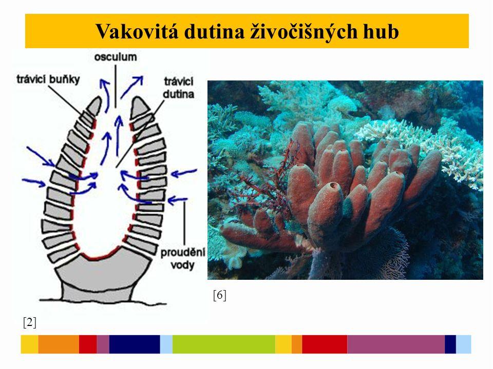 Vakovitá dutina živočišných hub [2] [6]