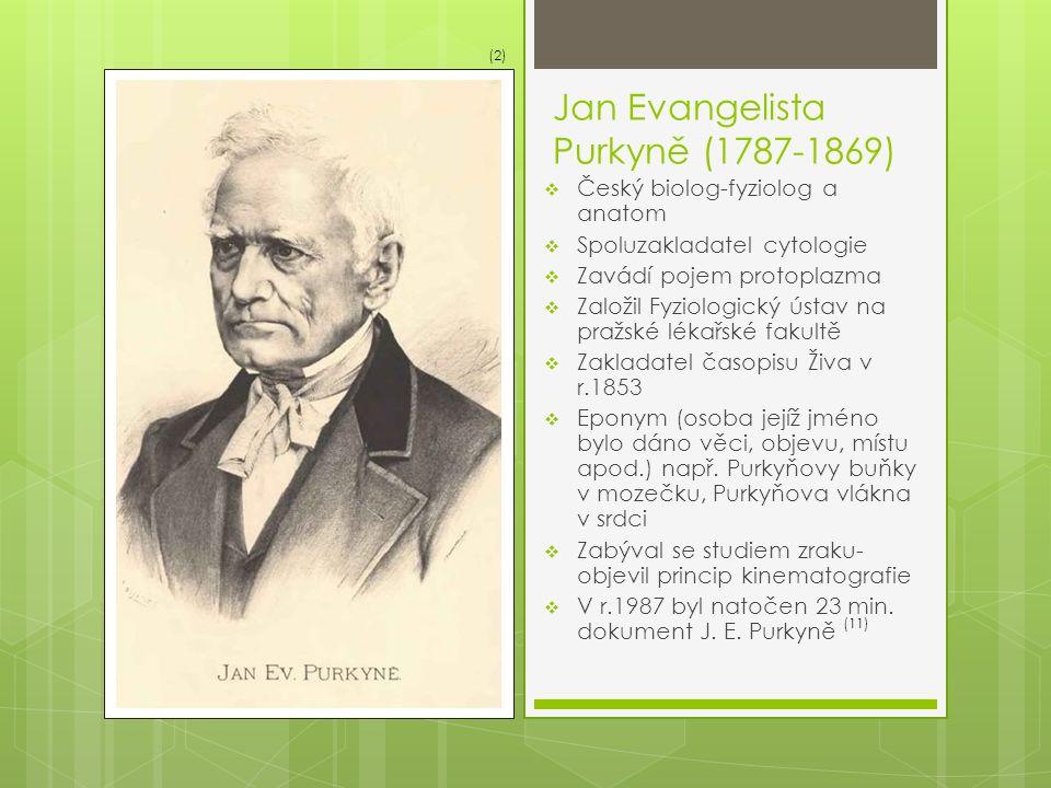 Jan Evangelista Purkyně (1787-1869)  Český biolog-fyziolog a anatom  Spoluzakladatel cytologie  Zavádí pojem protoplazma  Založil Fyziologický úst
