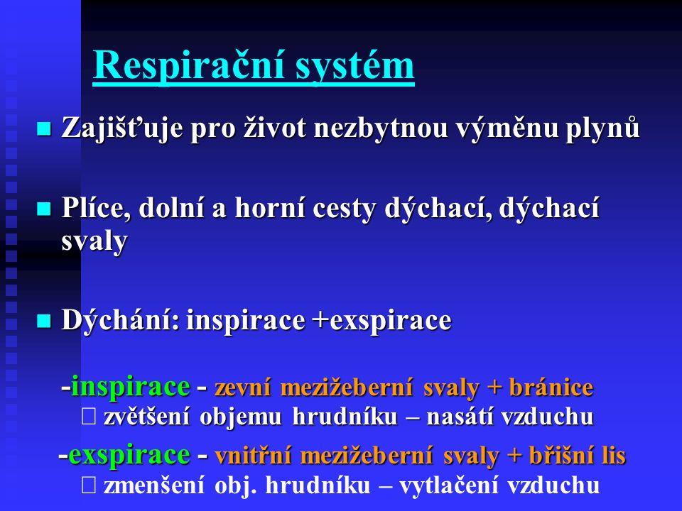 Respirační systém Zajišťuje pro život nezbytnou výměnu plynů Zajišťuje pro život nezbytnou výměnu plynů Plíce, dolní a horní cesty dýchací, dýchací sv
