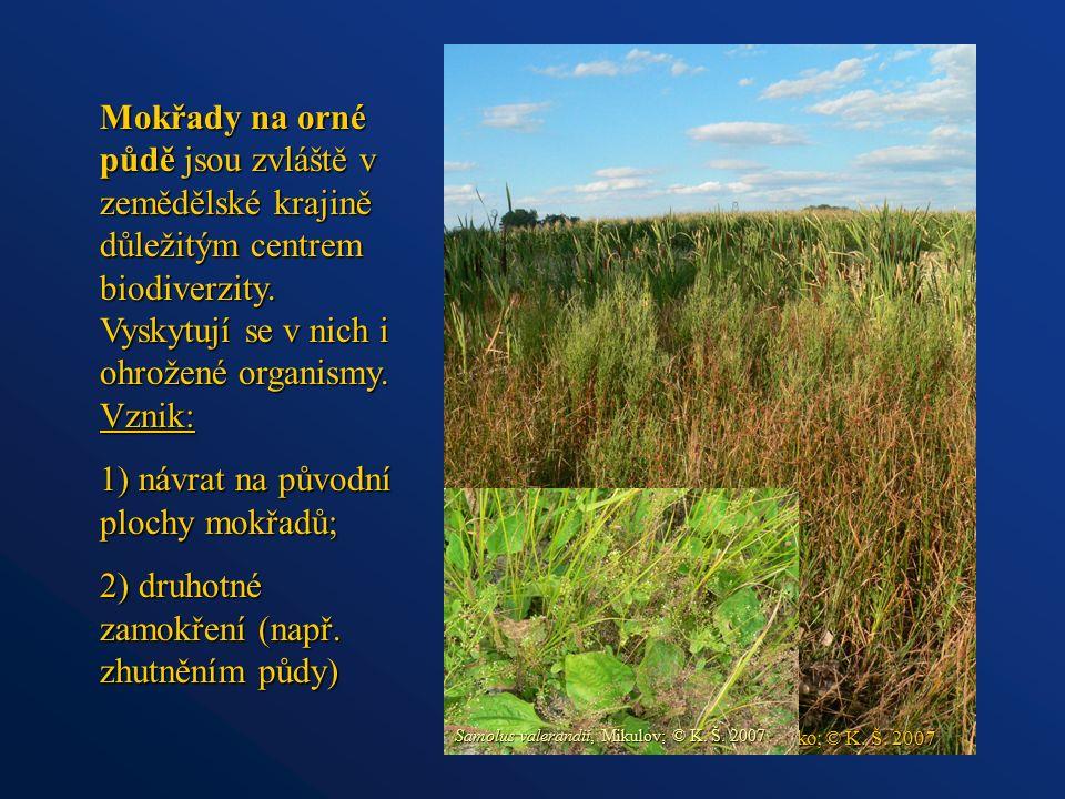 Mokřady na orné půdě jsou zvláště v zemědělské krajině důležitým centrem biodiverzity. Vyskytují se v nich i ohrožené organismy. Vznik: 1) návrat na p