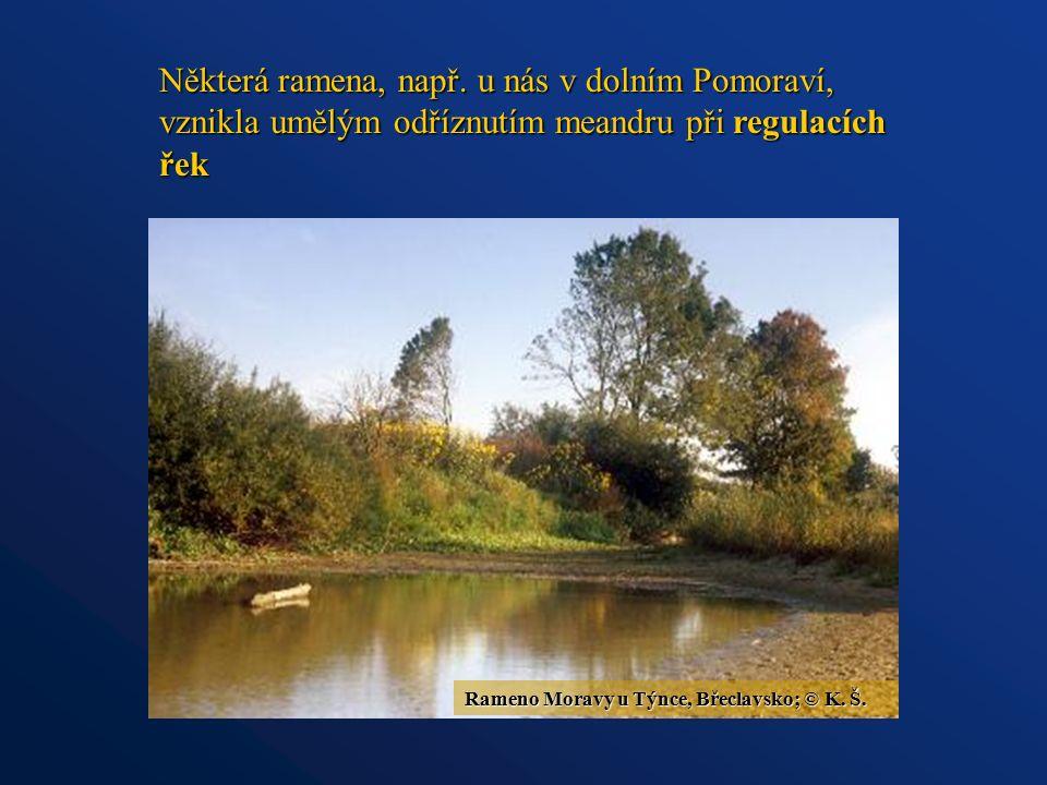 Některá ramena, např. u nás v dolním Pomoraví, vznikla umělým odříznutím meandru při regulacích řek Rameno Moravy u Týnce, Břeclavsko; © K. Š.