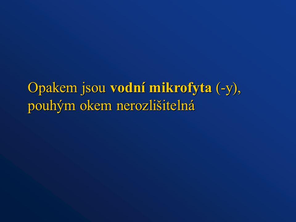 Opakem jsou vodní mikrofyta (-y), pouhým okem nerozlišitelná