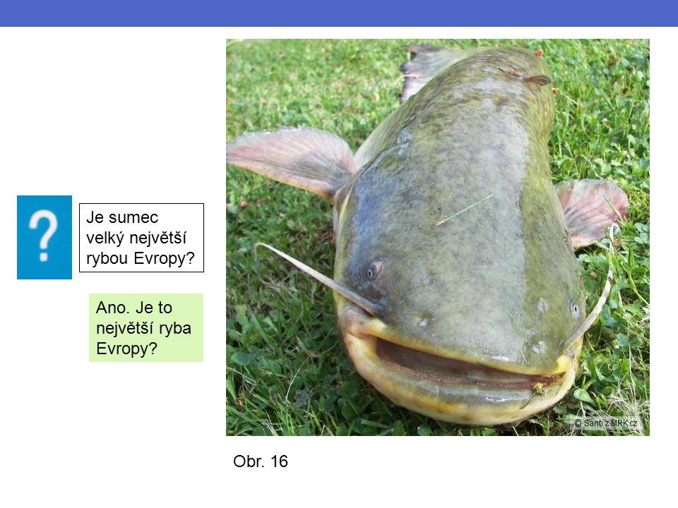 Obr. 16 Je sumec velký největší rybou Evropy Ano. Je to největší ryba Evropy