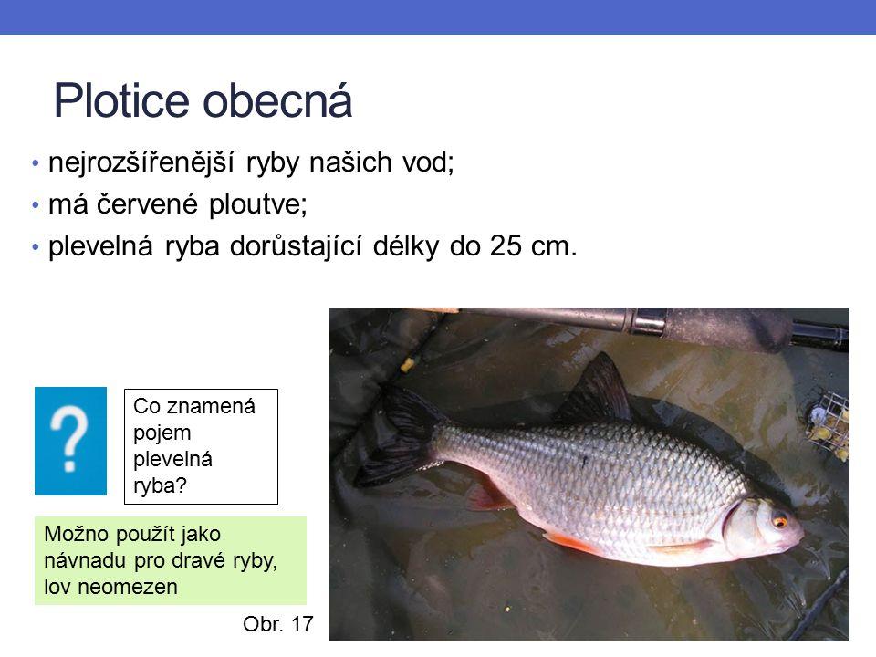 Plotice obecná nejrozšířenější ryby našich vod; má červené ploutve; plevelná ryba dorůstající délky do 25 cm.