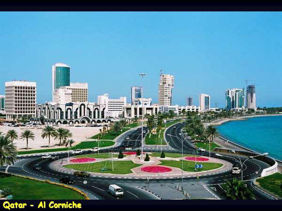 Qatar – odpočívající karavana velbloudů