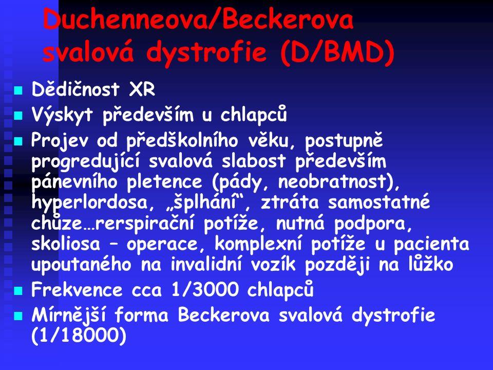 """Duchenneova/Beckerova svalová dystrofie (D/BMD) Dědičnost XR Výskyt především u chlapců Projev od předškolního věku, postupně progredující svalová slabost především pánevního pletence (pády, neobratnost), hyperlordosa, """"šplhání , ztráta samostatné chůze…rerspirační potíže, nutná podpora, skoliosa – operace, komplexní potíže u pacienta upoutaného na invalidní vozík později na lůžko Frekvence cca 1/3000 chlapců Mírnější forma Beckerova svalová dystrofie (1/18000)"""