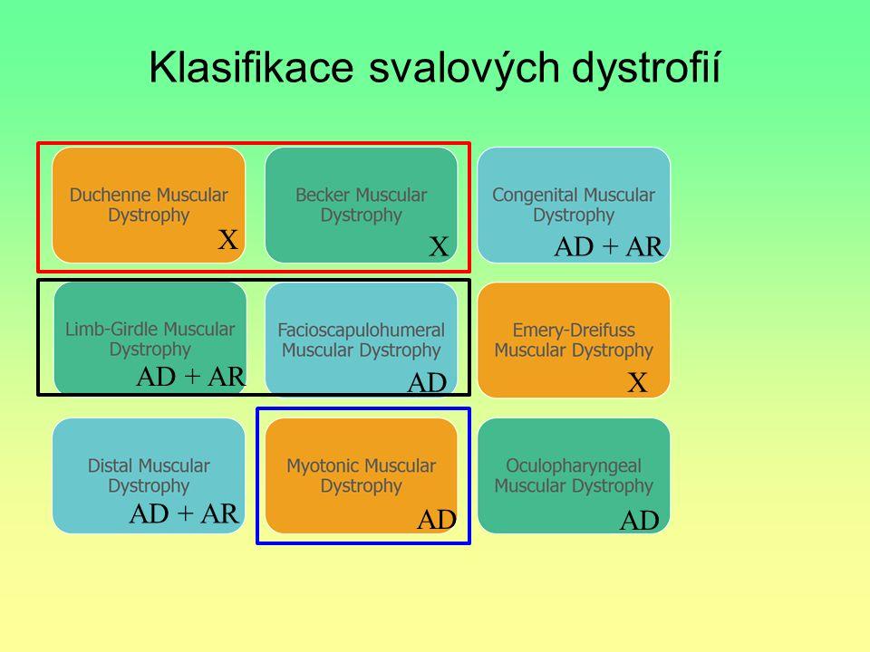 Klasifikace svalových dystrofií X X X AD + AR AD AD + AR AD AD + AR