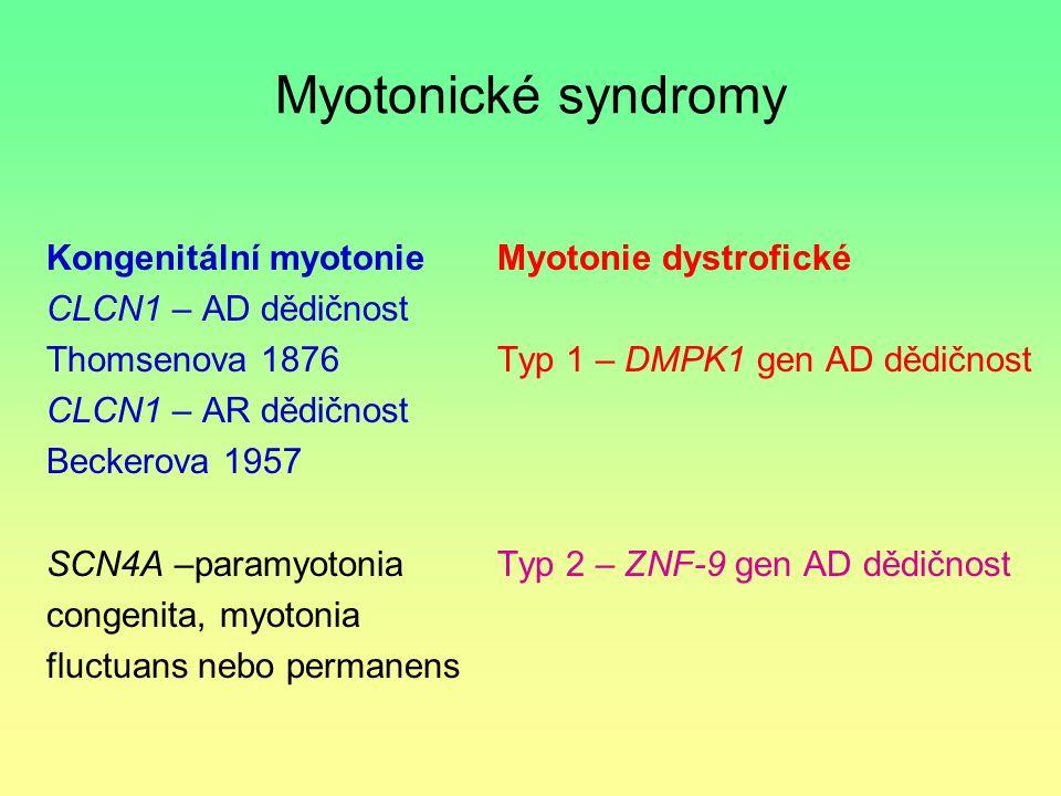 Myotonické syndromy Kongenitální myotonie CLCN1 – AD dědičnost Thomsenova 1876 CLCN1 – AR dědičnost Beckerova 1957 SCN4A –paramyotonia congenita, myot