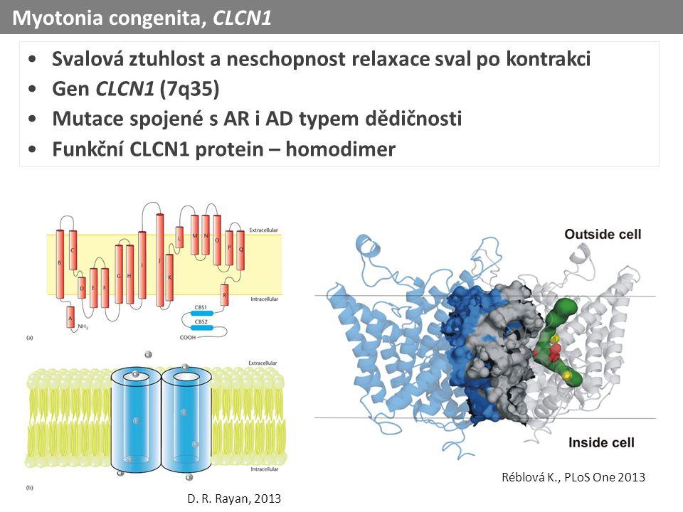 Svalová ztuhlost a neschopnost relaxace sval po kontrakci Gen CLCN1 (7q35) Mutace spojené s AR i AD typem dědičnosti Funkční CLCN1 protein – homodimer D.