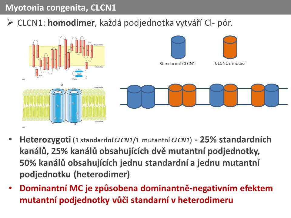  CLCN1: homodimer, každá podjednotka vytváří Cl- pór.