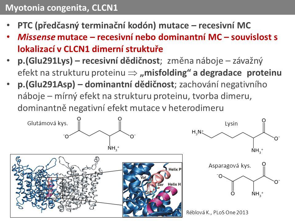 """PTC (předčasný terminační kodón) mutace – recesivní MC Missense mutace – recesivní nebo dominantní MC – souvislost s lokalizací v CLCN1 dimerní struktuře p.(Glu291Lys) – recesivní dědičnost; změna náboje – závažný efekt na strukturu proteinu  """"misfolding a degradace proteinu p.(Glu291Asp) – dominantní dědičnost; zachování negativního náboje – mírný efekt na strukturu proteinu, tvorba dimeru, dominantně negativní efekt mutace v heterodimeru Myotonia congenita, CLCN1 Glutámová kys."""