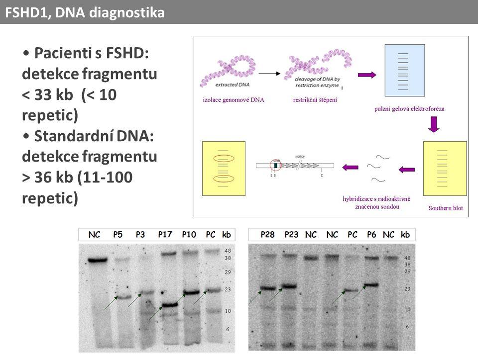 Pacienti s FSHD: detekce fragmentu < 33 kb (< 10 repetic) Standardní DNA: detekce fragmentu > 36 kb (11-100 repetic) FSHD1, DNA diagnostika