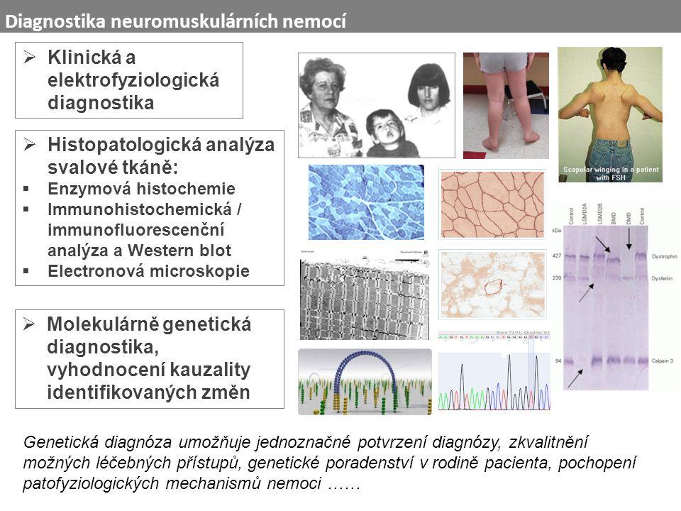  Klinická a elektrofyziologická diagnostika  Molekulárně genetická diagnostika, vyhodnocení kauzality identifikovaných změn Diagnostika neuromuskulárních nemocí  Histopatologická analýza svalové tkáně:  Enzymová histochemie  Immunohistochemická / immunofluorescenční analýza a Western blot  Electronová microskopie Genetická diagnóza umožňuje jednoznačné potvrzení diagnózy, zkvalitnění možných léčebných přístupů, genetické poradenství v rodině pacienta, pochopení patofyziologických mechanismů nemoci ……