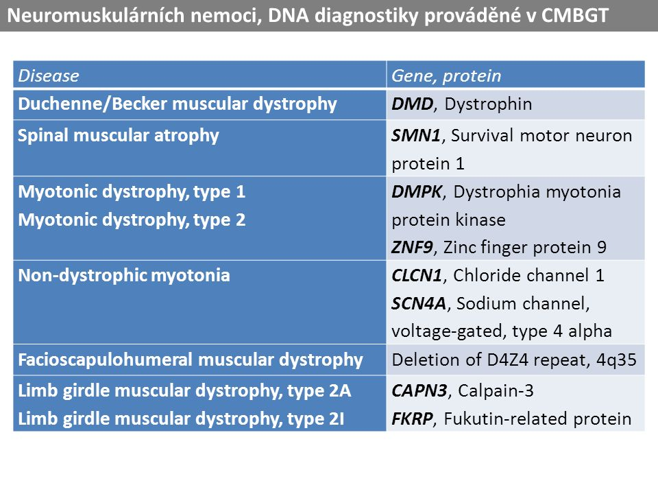 DiseaseGene, protein Duchenne/Becker muscular dystrophyDMD, Dystrophin Spinal muscular atrophy SMN1, Survival motor neuron protein 1 Myotonic dystrophy, type 1 Myotonic dystrophy, type 2 DMPK, Dystrophia myotonia protein kinase ZNF9, Zinc finger protein 9 Non-dystrophic myotonia CLCN1, Chloride channel 1 SCN4A, Sodium channel, voltage-gated, type 4 alpha Facioscapulohumeral muscular dystrophyDeletion of D4Z4 repeat, 4q35 Limb girdle muscular dystrophy, type 2A Limb girdle muscular dystrophy, type 2I CAPN3, Calpain-3 FKRP, Fukutin-related protein Neuromuskulárních nemoci, DNA diagnostiky prováděné v CMBGT