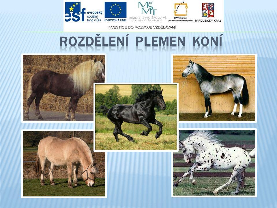 Z užitkového typu vyplývá morfologická rozdílnost: koně klusoví, cvaloví  koně klusoví, cvaloví  jezdečtí koně, dostihoví  práce v rychlých chodech  lehčí kostra, ušlechtilá hlava, delší jemnější krk, hlubší hrudník (dýchací typ - větší kapacita plic), výrazný kohoutek, dobré osvalení, suché končetiny, delší kosti  prostorné chody