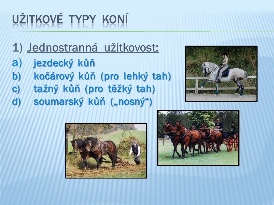 """1)Jednostranná užitkovost: jezdecký kůň a) jezdecký kůň b) kočárový kůň (pro lehký tah) c) tažný kůň (pro těžký tah) d) soumarský kůň (""""nosný )"""