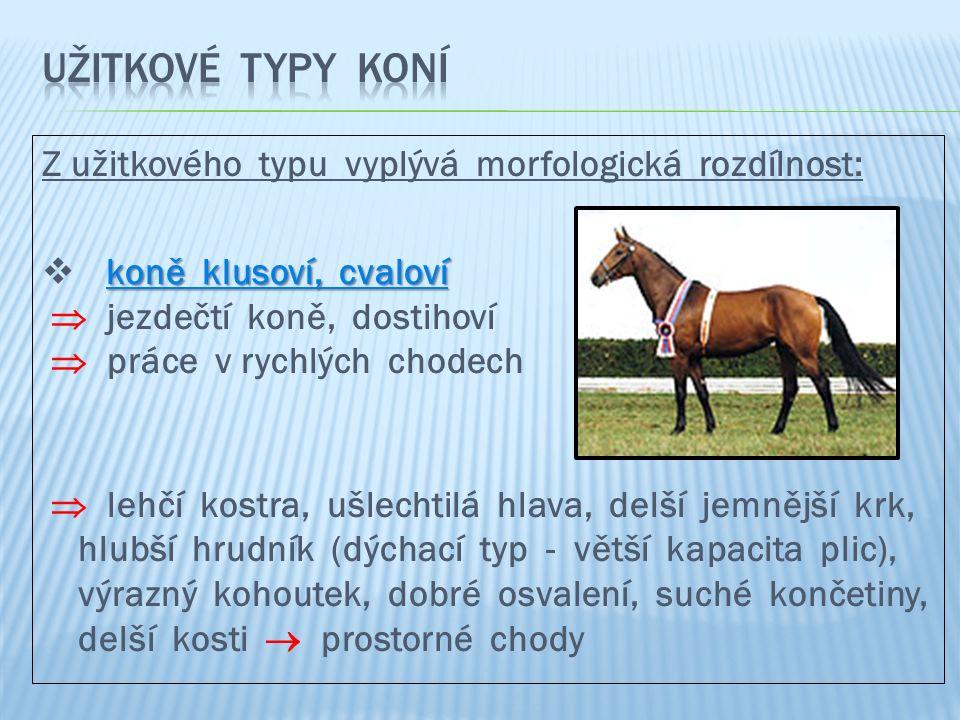 Z užitkového typu vyplývá morfologická rozdílnost: koně klusoví, cvaloví  koně klusoví, cvaloví  jezdečtí koně, dostihoví  práce v rychlých chodech