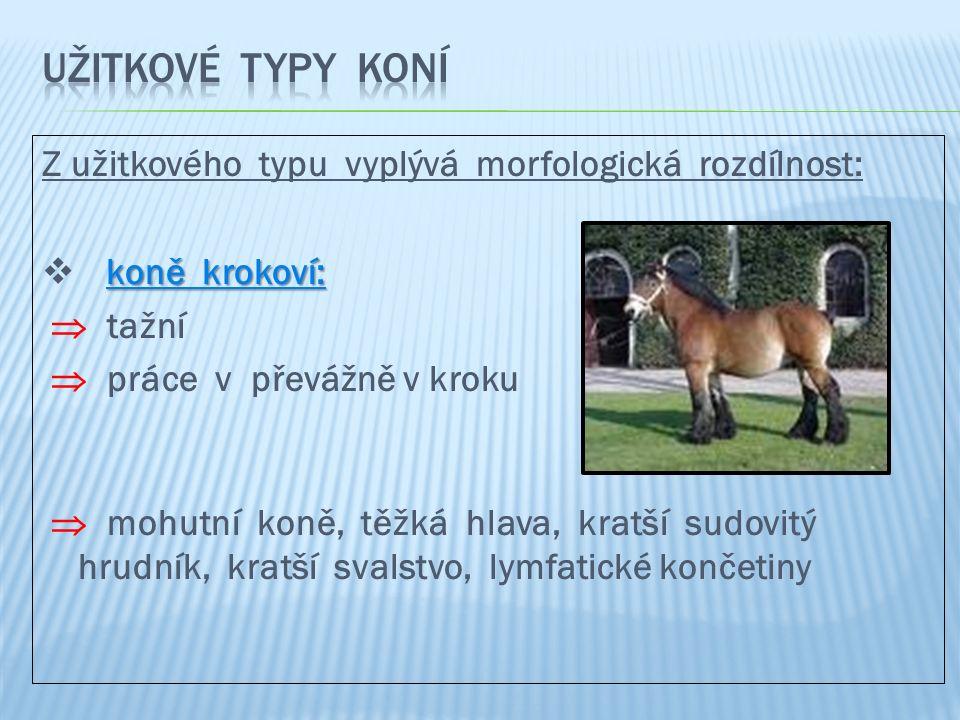 Z užitkového typu vyplývá morfologická rozdílnost: koně krokoví:  koně krokoví:  tažní  práce v převážně v kroku  mohutní koně, těžká hlava, kratší sudovitý hrudník, kratší svalstvo, lymfatické končetiny