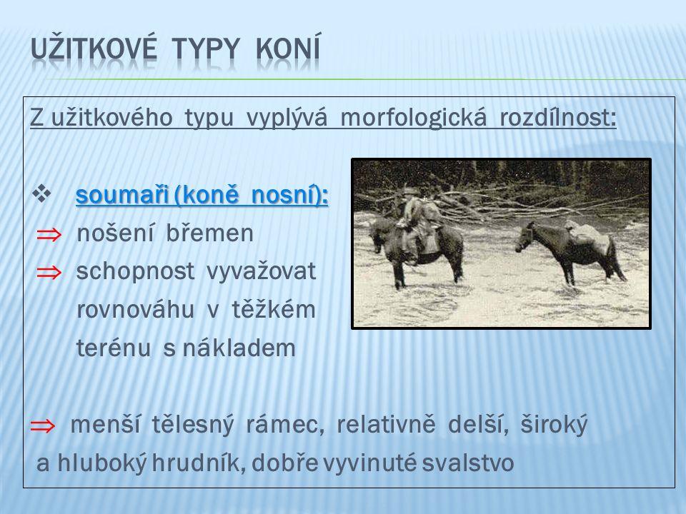 Z užitkového typu vyplývá morfologická rozdílnost: soumaři (koně nosní):  soumaři (koně nosní):  nošení břemen  schopnost vyvažovat rovnováhu v těž
