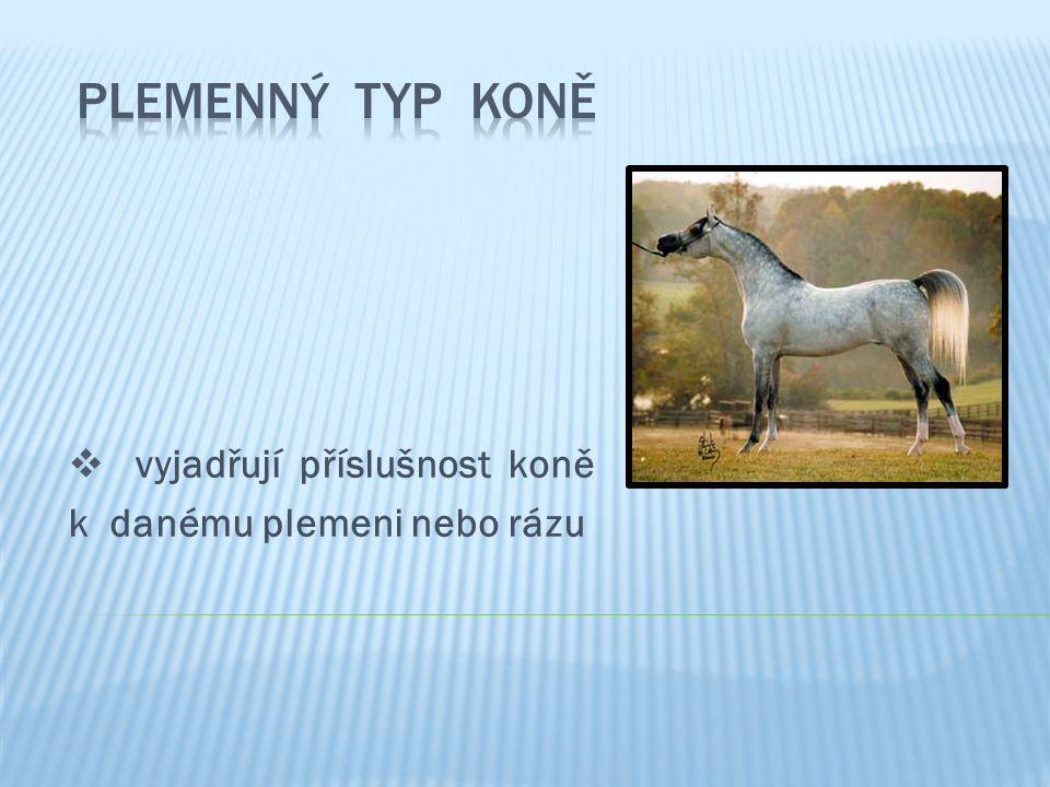  vyjadřují příslušnost koně k danému plemeni nebo rázu