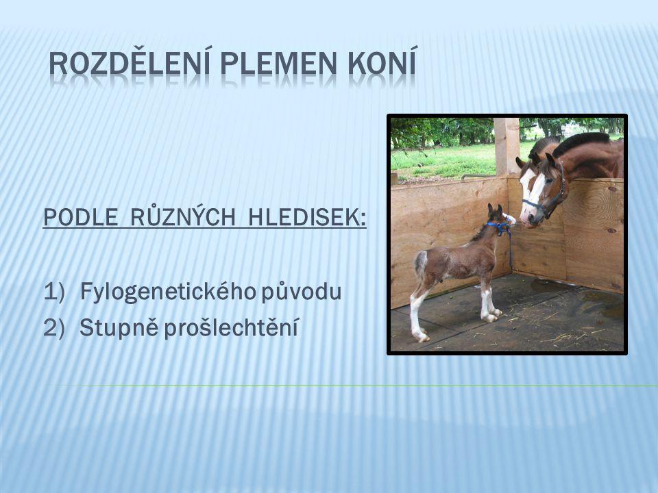 1)Fylogenetického původu: 4 plemenné skupiny Skupina koní stepních (mongolských) a) Skupina koní stepních (mongolských) b) Skupina koní orientálních (východních) – podskupina íránských koní – podskupina arabských koní – podskupina tarpánovitých koní – podskupina starošpanělských koní – podskupina anglických koní Skupina koní okcidentálních (západních) c)Skupina koní okcidentálních (západních) d)Skupina koní nordických (severských)