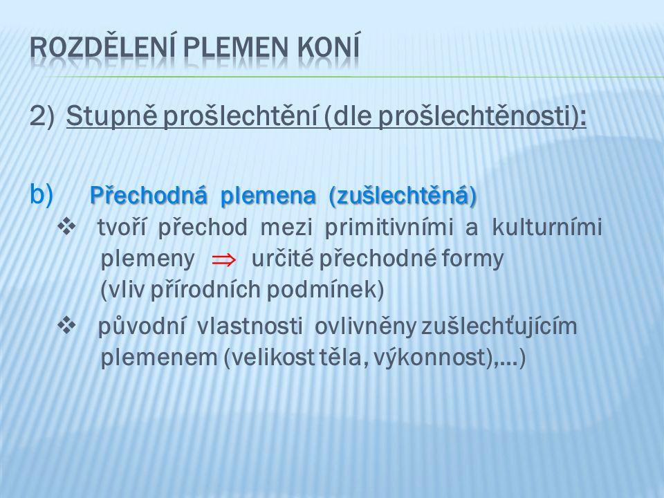 2)Stupně prošlechtění (dle prošlechtěnosti): Přechodná plemena (zušlechtěná) b) Přechodná plemena (zušlechtěná)  tvoří přechod mezi primitivními a ku
