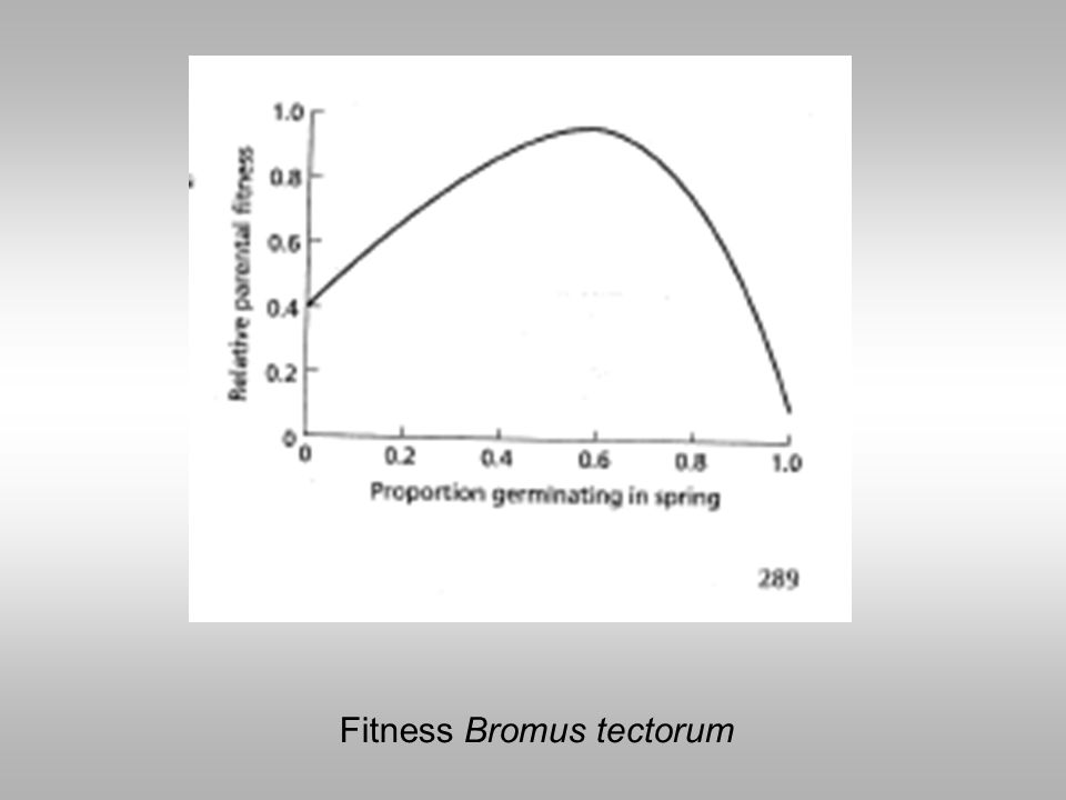 Fitness Bromus tectorum
