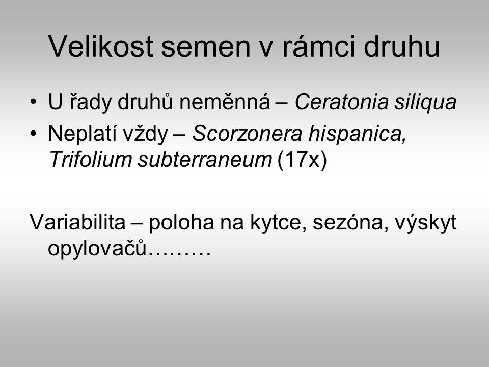 Velikost semen v rámci druhu U řady druhů neměnná – Ceratonia siliqua Neplatí vždy – Scorzonera hispanica, Trifolium subterraneum (17x) Variabilita – poloha na kytce, sezóna, výskyt opylovačů………