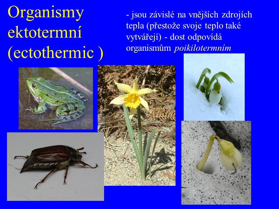 Organismy ektotermní (ectothermic ) - jsou závislé na vnějších zdrojích tepla (přestože svoje teplo také vytvářejí) - dost odpovídá organismům poikilotermním