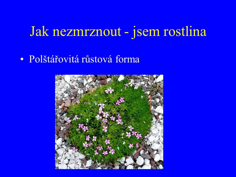 Jak nezmrznout - jsem rostlina Polštářovitá růstová forma