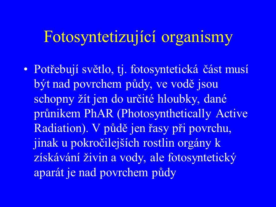 Fotosyntetizující organismy Potřebují světlo, tj. fotosyntetická část musí být nad povrchem půdy, ve vodě jsou schopny žít jen do určité hloubky, dané