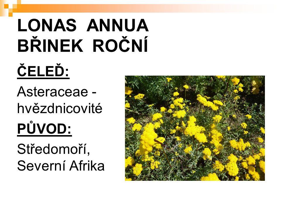 LONAS ANNUA BŘINEK ROČNÍ ČELEĎ: Asteraceae - hvězdnicovité PŮVOD: Středomoří, Severní Afrika