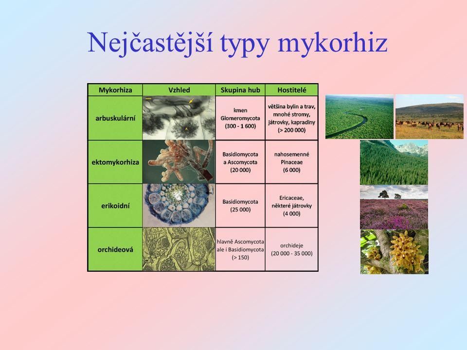 Kvantifikace metodami molekulární biologie To jsou dnes převažující metody kvantifikace AM hub Více se o nich dozvíte v druhé části tohoto kurzu