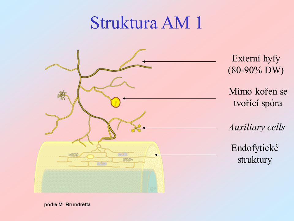 Metody: navození AM symbiózy Základem kvalitních pokusů jsou izoláty (inokulum) - pozor, některé skupiny (Glomus, Acaulospora) na produkci spór moc nespoléhají a mnohé druhy odmítají nechat se pěstovat BEG: www.i-beg.eu a INVAM: invam.wvu.edu Terénní inokulum, pokud nekontrolujeme identitu houby - může ale vzniknout problém s hostitelskou specificitou (optimálnost vztahu) Metody: potlačení AM ve skleníku Sterilní substrát (vyvařený písek) Sterilizace půdy (gamma záření, teplo) - problém mrtvolek Přefiltrovaný půdní extrakt, sítem 32  m (opatrně!) Selektivní fungicid - jen velmi nepřesně selektivní