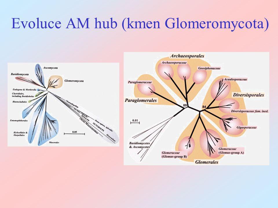 Evoluce arbuskulární symbiózy Nejstarší typ mykorrhizy, asi umožnil osídlení souše Kompletní závislost na hostiteli Asexuální (?), mnohojaderné (i uvnitř jedné spóry genetická diversita), možná výměna jader.