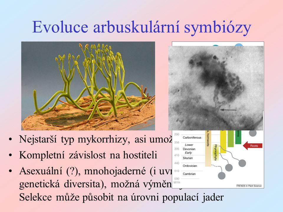 Význam AM hub pro rostliny Příjem půdních zdrojů (zejména P, ale i Zn, Cu, N, voda) - některé druhy si bez AM symbiózy nevystačí Ochrana kořenů před patogeny (houby, bakterie) - též na úrovni společenstva Významný vliv na úspěch hostitelských druhů ve společenstvu: často ve prospěch podřazených druhů (i les) Common mycelial network – propojení mnoha rostlin Vliv na morfologické a fyziologické vlastnosti hostitele: kontrolované pokusy bez AM často měří artefakty Vliv na interakci s hostitelskými herbivory (i nad zemí) - též přímá interakce se svými herbivory (Collembola, Nematoda) v rhizosféře