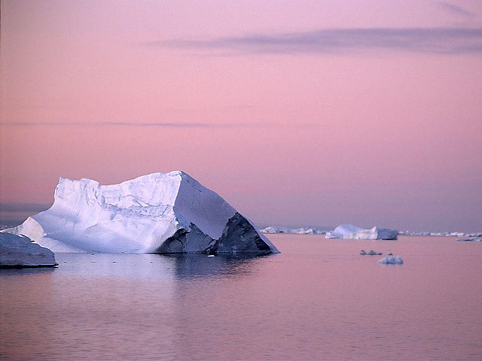 Navzdory krutému a nepříznivému počasí má Antarktida bohatou faunu, která se překvapivě dobře přizpůsobuje těžkým životním podmínkám.