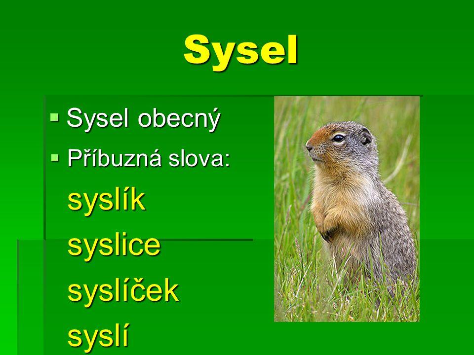 Sysel  Sysel obecný  Příbuzná slova: syslíksyslicesyslíček syslí syslí