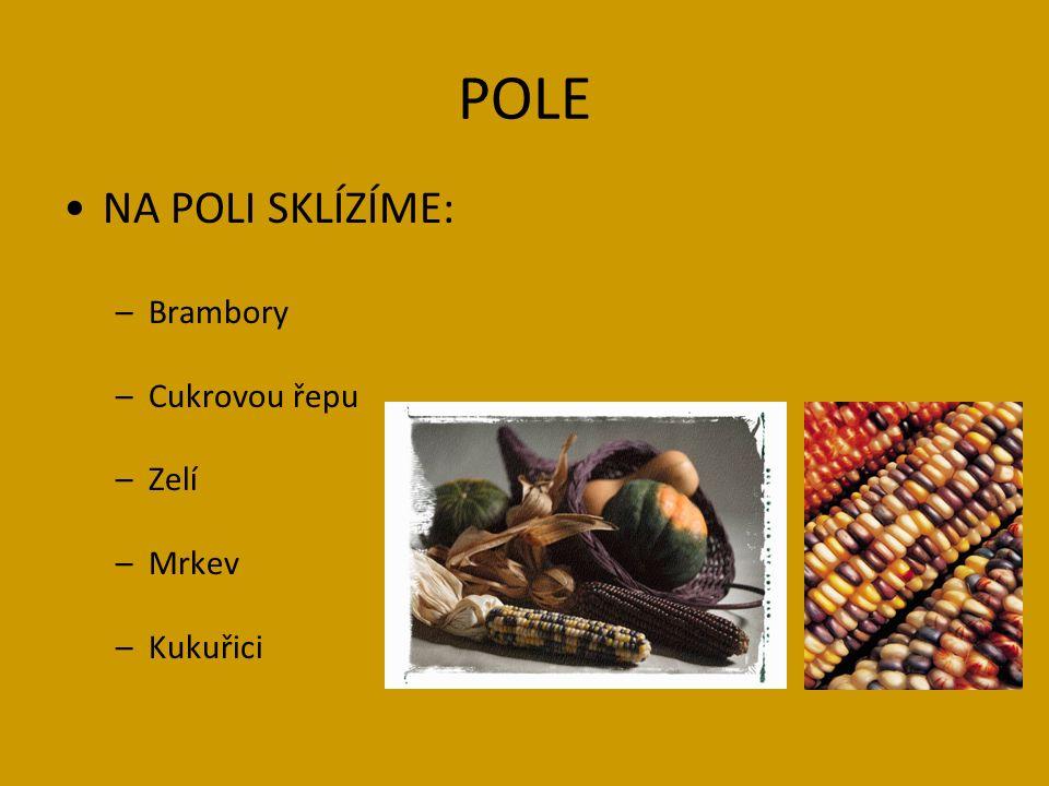 CITACE Ilustrace: www.office.microsoft.com Verše: autor Wikipedia.