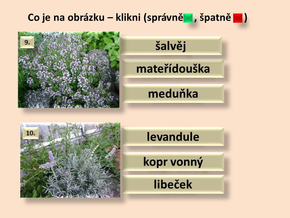 pažitka meduňka cibule šalotka meduňka rozmarýn dobromysl Co je na obrázku – klikni (správně, špatně ) 7.