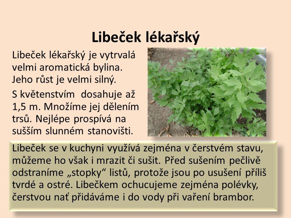 Kopr vonný Kopr vonný je jednoletá velmi aromatická bylinka.