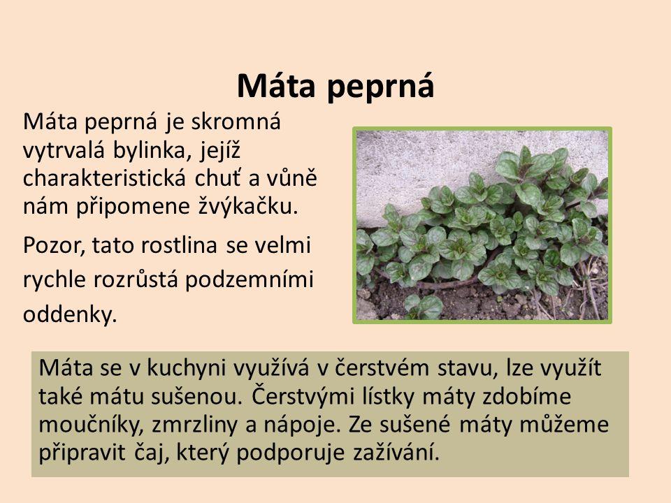 Libeček lékařský Libeček lékařský je vytrvalá velmi aromatická bylina.