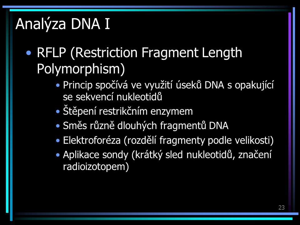 23 Analýza DNA I RFLP (Restriction Fragment Length Polymorphism) Princip spočívá ve využití úseků DNA s opakující se sekvencí nukleotidů Štěpení restrikčním enzymem Směs různě dlouhých fragmentů DNA Elektroforéza (rozdělí fragmenty podle velikosti) Aplikace sondy (krátký sled nukleotidů, značení radioizotopem)