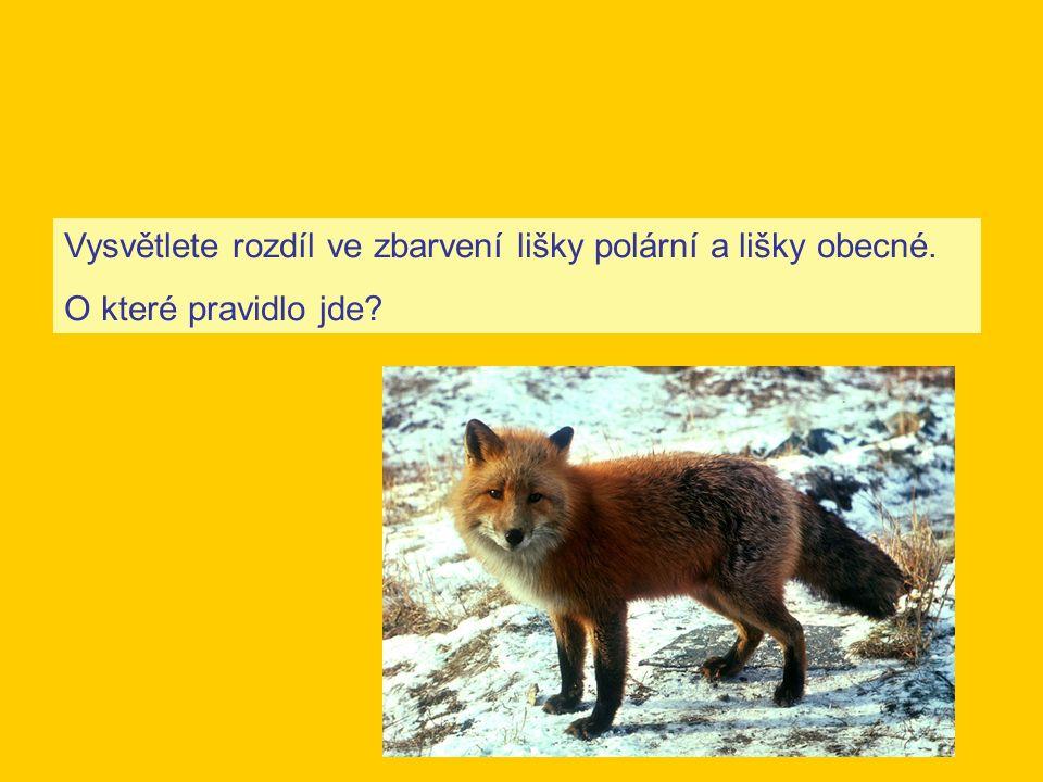 Vysvětlete rozdíl ve zbarvení lišky polární a lišky obecné. O které pravidlo jde?