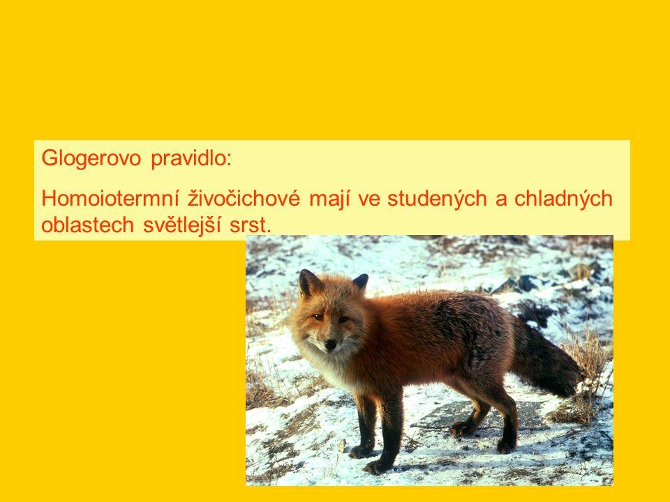 Glogerovo pravidlo: Homoiotermní živočichové mají ve studených a chladných oblastech světlejší srst.