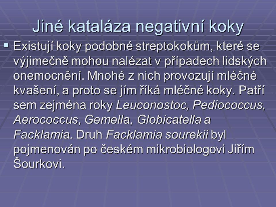 Jiné kataláza negativní koky  Existují koky podobné streptokokům, které se výjimečně mohou nalézat v případech lidských onemocnění.