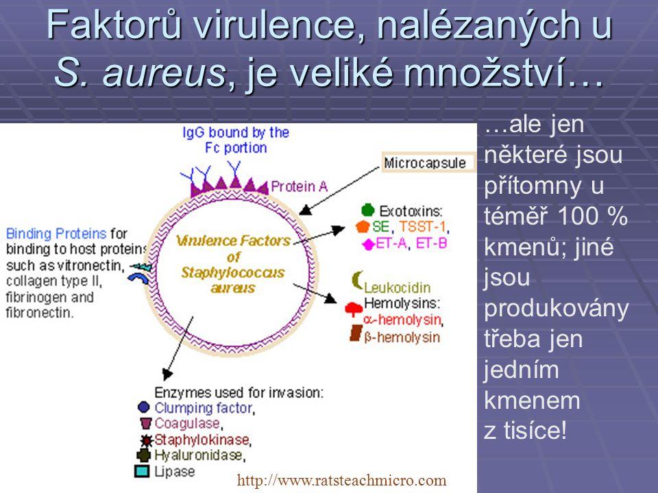 Faktorů virulence, nalézaných u S. aureus, je veliké množství… http://www.ratsteachmicro.com …ale jen některé jsou přítomny u téměř 100 % kmenů; jiné
